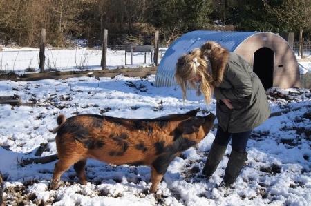 女の子の冬の珍しい品種の豚との相互作用 写真素材