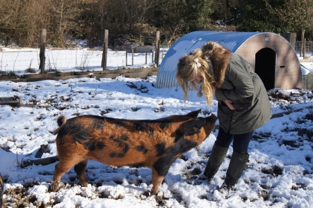 mud and snow: Girl interacting with rare breed pig in Winter