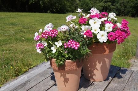 夏の庭の decking の観葉植物