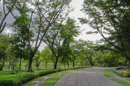 public park: Camino en un parque p�blico Foto de archivo