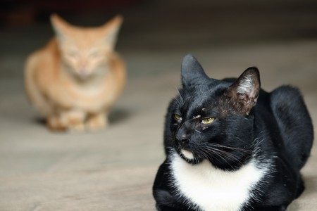 formidable: Black cats face a formidable notch in the morning calm. Stock Photo
