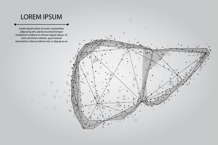 Abstract line and point human liver. Low poly Healthcare Vector Illustration 일러스트