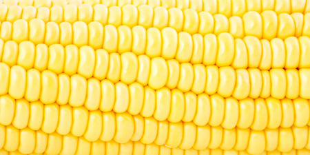 backgroung: Sweet corn closeup and backgroung