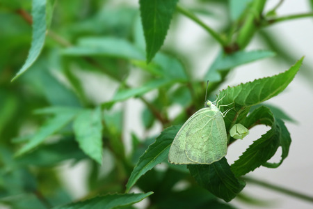 transfigure: Finish, Butterfly change form chrysalis