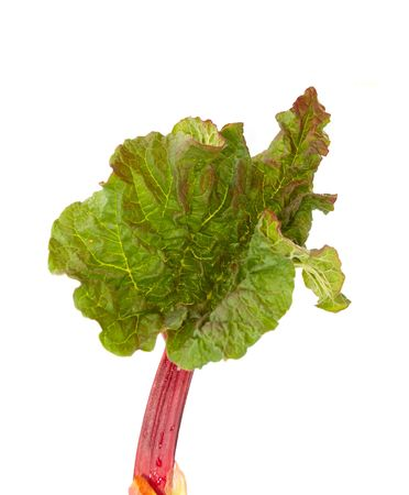 young leaf: de hojas j�venes de pieplant aisladas  Foto de archivo