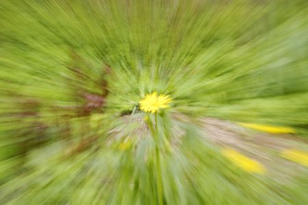 zooming: abstract background -yellow dandelion is zooming Stock Photo