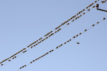 flock of birds sitting on wires against the background of blue sky Stock Photo - 1674103