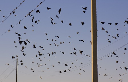 flock of birds sitting on wires and flying against the background of blue sky Stock Photo - 1674102