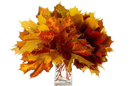 senescence: bouquet of colorful  leaves in glass vase isolated on white
