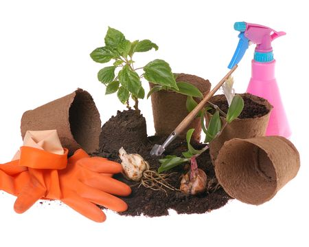 springtime  home gardering- potting plants  in peat pots Stock Photo - 2731781