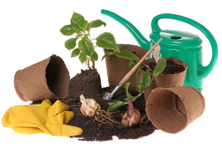 gardening gloves: springtime  home gardering- potting plants  in peat pots