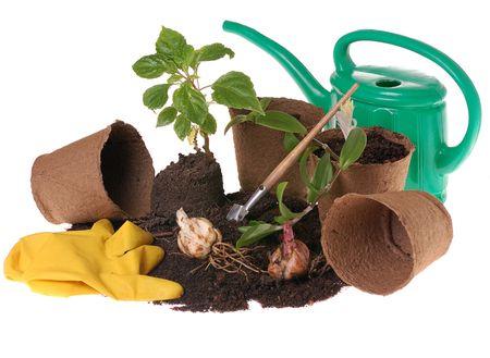gardening gloves: springtime  home gardering- potting plants  in peat pots