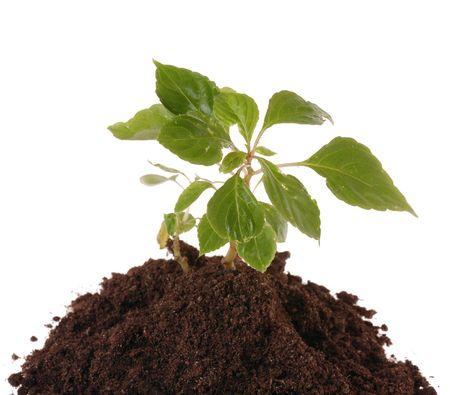 springtime  home gardering- potting plants  in peat pots Stock Photo - 2731758
