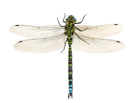 libellula vicino isolato su bianco