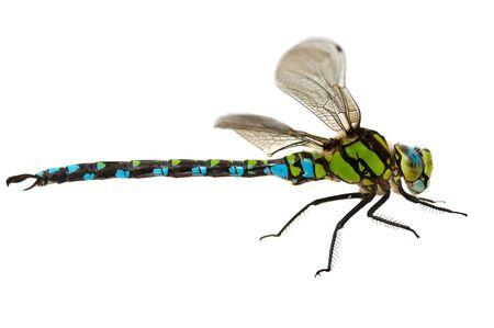 macro animals: dragonfly close up isolated on white