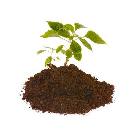 seedling  isolated on white Stock Photo - 2754292