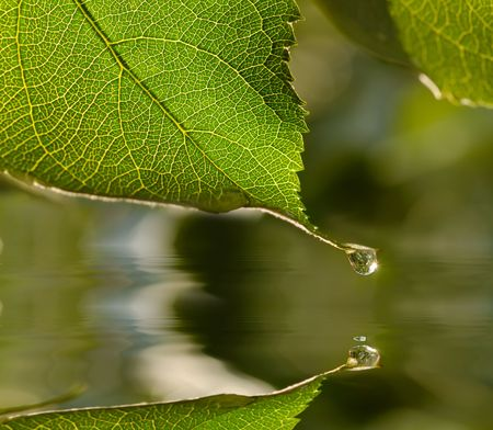tip of the leaf: raindrop  hanging on leaf tip reflects in water Stock Photo