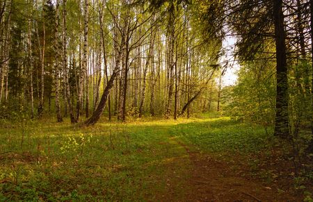 spring forest in sunraise Stock Photo - 3053815