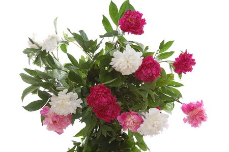 bunch of peonies isolated on white