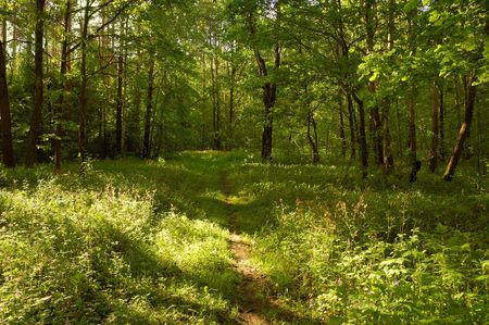 pathway in sunny summer forest Stock Photo - 3323540
