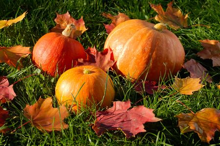 three pumpkins with colorful autumn leaves on green grass