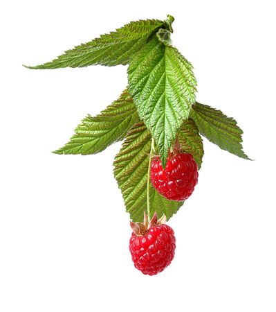 raspberry with green leaves isolated on white background Stock Photo