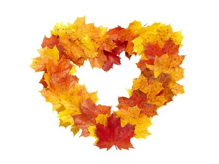 heart-shaped frame of colorful maple leaves isolated on white photo