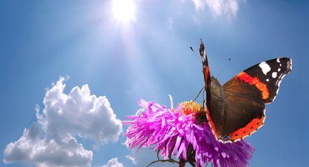 farfalla sul fiore blu contro il cielo nuvoloso con dom