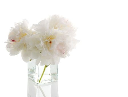bianco peonia in vaso di vetro isolato su bianco