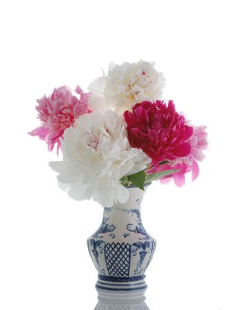 colorful peony in vase isolated on white photo