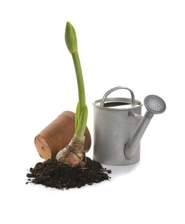 watering can: clay pot, iron watering can, soil, seedling,  on white background