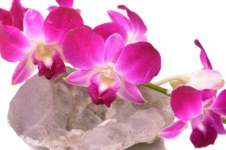 orchid on druse of quartz photo