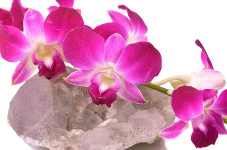 orchid on druse of quartz photo