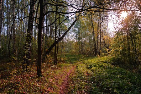 path in morning spring forest Stock Photo - 4543637
