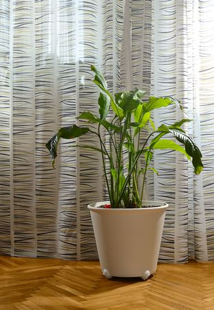 white potted plant standing on parquet floor in living  room Stock Photo - 4685909