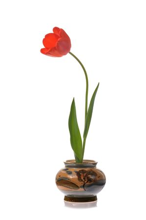 caulis: red tulip in  painted ceramic pot isolated on white