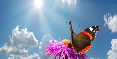 farfalla su fiore contro blu cielo nuvoloso con il sole