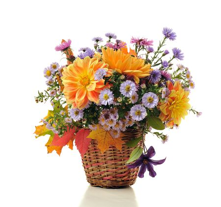 georgina: bouquet of autumn flowers in basket isolated on white