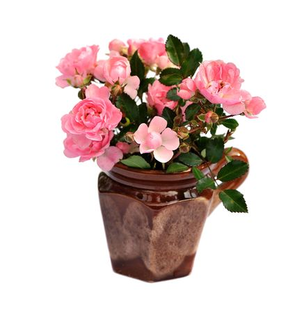 bunch of small pink roses in ceramic pot