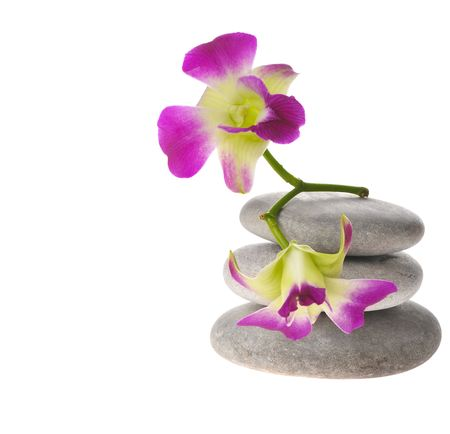 twig of purple orchid on stack of  pebbles isolated on white photo
