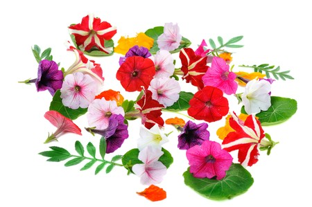 multicolour  floral background isolated on white background Stock Photo - 7849648