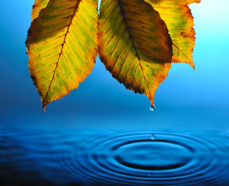 falling drops from tip of yellowed  leaf into blue rippled water photo
