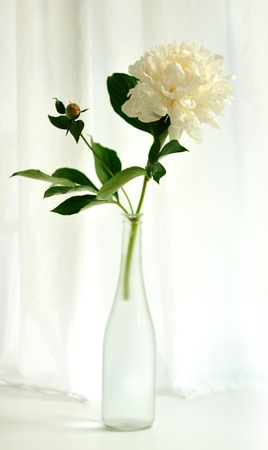 flower of  white peony with leaves in glass bottle photo
