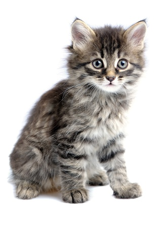 1,5 month old kitten on white background Stock Photo - 8746263