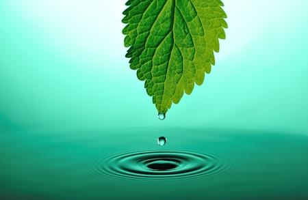 cadere gocce dalla punta della foglia verde in verde acqua ondeggianti Archivio Fotografico