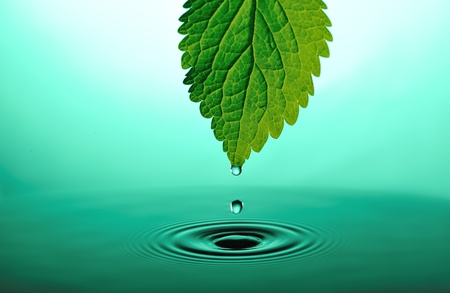 falling drops from tip of green leaf into green rippled water photo