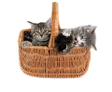 three small kittens in woven basket on white background Stock Photo - 8778393