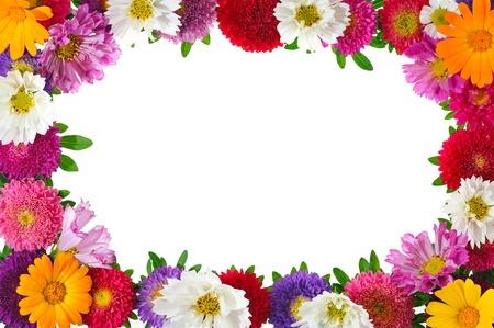 borde de flores: marco floral de colorido aster aislada sobre fondo blanco