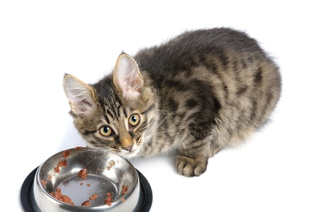 feed: small kitten near its bowl with meal, looking at camera Stock Photo