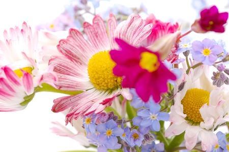 small bouquet of spring  marguerite and forget-me-not flowers photo
